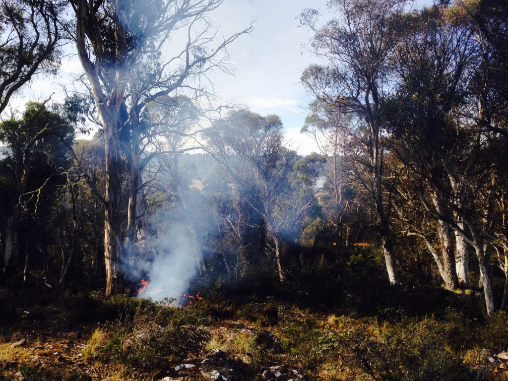 A woodland burn in Tasmania, one of the first burns implemented in decades.